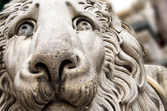 Lion Statue Cathedral St. Lawrence Genova Stock Photos