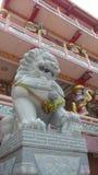 Lion statue in Chinese shrine, Chonburi,Thailand Stock Photos