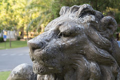 Lion statue inclining figure. Big and solid statue for decoration in the garden Stock Photography