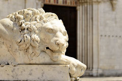 Lion statue in Italy Royalty Free Stock Images