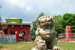 Lion statue. The lion statue at local chinese shrine in phuket province, Thailand royalty free stock image