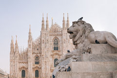 Lion statue in Milano Royalty Free Stock Photo