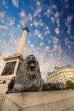 Lion Statue and Nelson Column at Trafalgar Square - Upward view. At sunset, London, UK Stock Photography