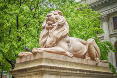 Lion Statue New York City Arkivbild
