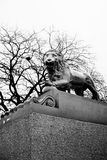 The Lion Statue Saint Petersburg, Russian in black and white. The Lion Statue Saint Petersburg at the Admiralty Embankment , Russian in black and white royalty free stock photography