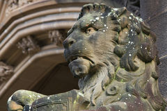 Lion statue in sandstone guarding entrance. Statue of a lion at the entrance to a gothic building Stock Photos