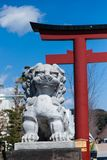 Lion statue and torii gate. In kamakura ,Japan royalty free stock image
