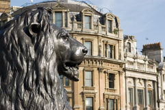 Lion statue, Trafalgar Square. One of the four bronze lion statues at the base of Nelson's Column, Trafalgar Square, London.  Looking along Whitehall Stock Photo