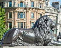 Lion statue of Trafalgar Square, London Royalty Free Stock Photography