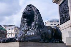 Lion statue Trafalgar Square London. Lion statue Trafalgar Square in London in Britain in Europe Stock Image