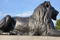 Lion Statue at Trafalgar Square in London Royalty Free Stock Image