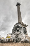 Lion Statue, Trafalgar Square, London, UK Stock Image