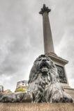 Lion Statue, Trafalgar Square, Londres, R-U Image stock