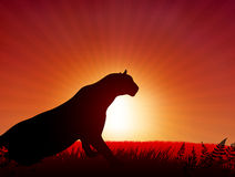 Lion on Sunset Background Royalty Free Stock Photography