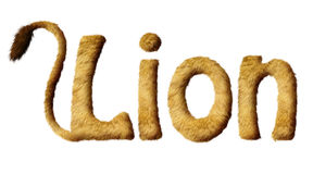Lion Text velu Images libres de droits