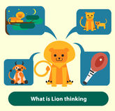 Lion thinking about food, hunting, pride and Royalty Free Stock Photography