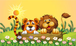 A lion and a tiger Royalty Free Stock Images