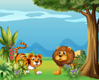 A lion and a tiger near the hills Royalty Free Stock Image