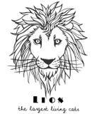 Lion tiré par la main décoratif noir et blanc Image stock