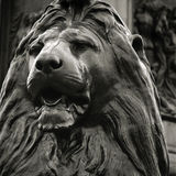 Lion at Trafalgar Square Stock Images