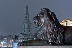 Lion on trafalgar square. Illuminated statue of a lion looking the church of saint martin in the field, on trafalgar square Royalty Free Stock Photos