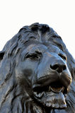 Lion at trafalgar square Royalty Free Stock Images