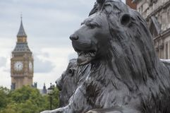 Lion in Trafalgar Square. With Big Ben in the background Stock Photos