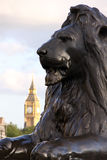 Lion on Trafalgar square. With Big ben in background (London, England Stock Photography