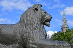 Lion at Trafalgar Square with church spire in background Royalty Free Stock Photo