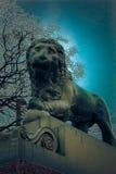 Lion triste Photos libres de droits