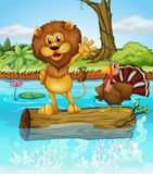 A lion and a turkey above a floating wood Stock Photo