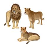 Lion with two lionesses stock illustration