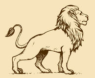 Free Lion. Vector Drawing Royalty Free Stock Photos - 51645018