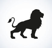 Lion. Vector drawing Stock Photography