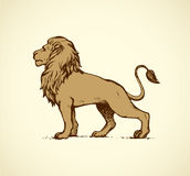Lion. Vector drawing Stock Image
