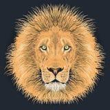 Lion vector illustartion Stock Photography
