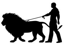 Lion walker. Editable vector silhouette of a man walking a lion on a leash Stock Image