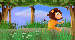 A lion walking in the forest alone Stock Image