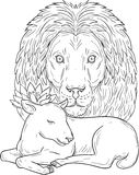 Lion Watching Over Sleeping Lamb Drawing Stock Photography