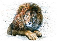 Free Lion Watercolor Predator Animals Wildlife Painting Stock Photography - 114209062