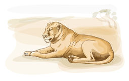 Lion. Watercolor style. Royalty Free Stock Images