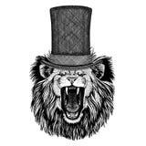 Lion wearing cylinder top hat. Vintage style drawing Animal wearing cylinder top hat stock images