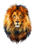 Lion. White back, large, animal ear, mammals, whild life, one animal Stock Photography