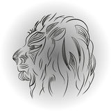 Lion on a white background Royalty Free Stock Images