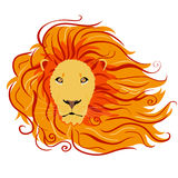 Lion wild. Illustration of stylized lion head with a beautiful mane Stock Image