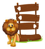 A lion beside the wooden arrowboards Royalty Free Stock Photos