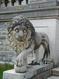 Lione Fotografie Stock