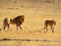 Sydliga afrikanska djur Royaltyfria Foton