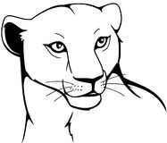 Lioness. Illustration of a lioness in black and white Royalty Free Stock Image