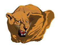 Lioness. Angry lioness illustration in awareness Royalty Free Stock Image